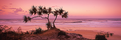 bm_76_pandanus_sunset.jpg